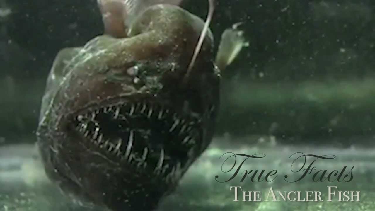 True Facts About The Angler Fish Youtube