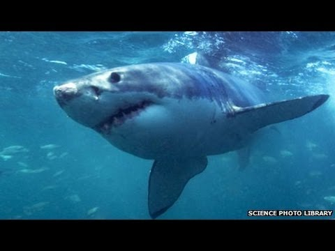 Shark kills fisherman in kayak off coast of Hawaii