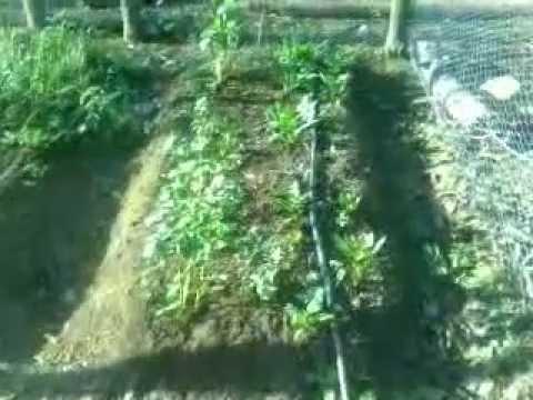Hortaliza en casa con sistema de riego casero abasolo del valle