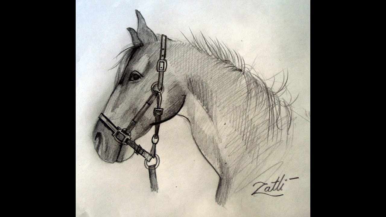 How To Draw A Horse Head How to draw a h...