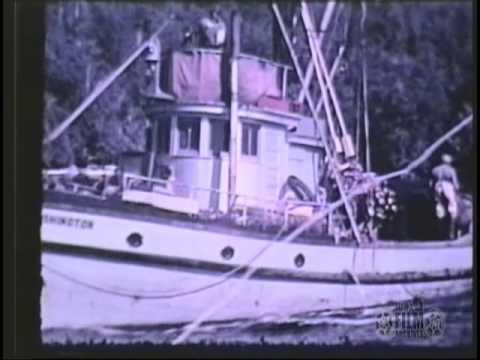 Commercial Net Fishing YouTube
