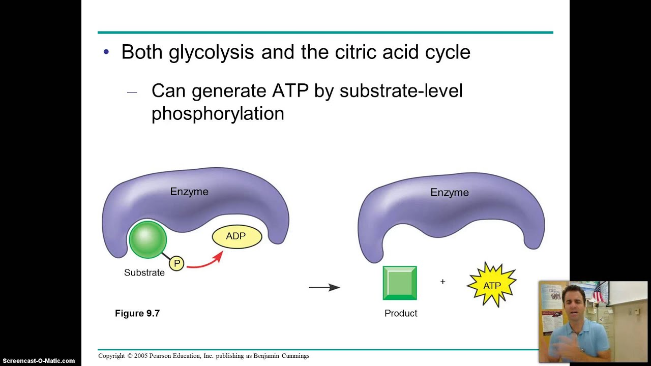 ap bio course notes chapter 7 Ap biology chapter powerpoints chapter 4 organelles tour of the cell lopez chapter 4 organelles tour of the cellppt 1225 mb (last modified on august 29, 2018.