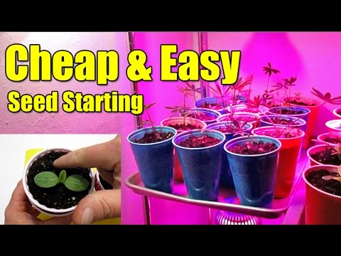 Cheap & Easy Seed Starting Pots Using Plastic Cups