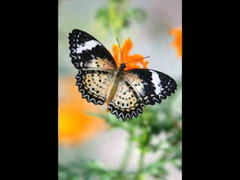 Nhạc không lời cực hay. Đôi bướm bay lượn