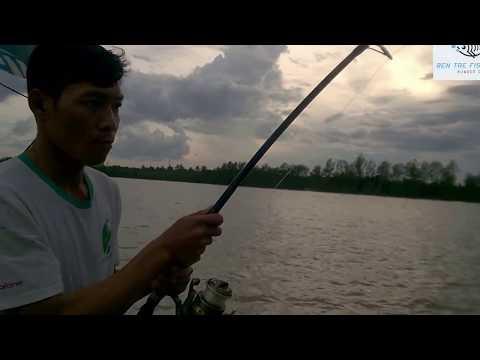 CÂU CÁ SÔNG BẾN TRE - BASA - NGÁT - DỨA | HUYNH KHOA FISHING