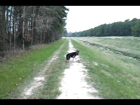 Shiloh at 10 and a half months old on a walk with me.January 28, 2013 5:07 PM