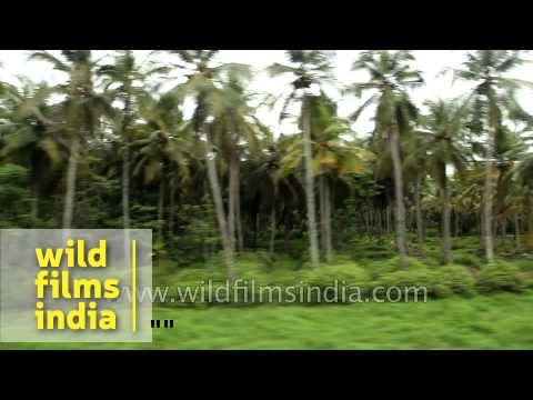 Passing by coconut trees: Train journey to Kerala