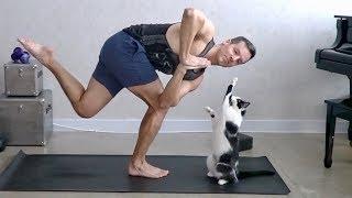 Gato interrumpiendo la clase de yoga