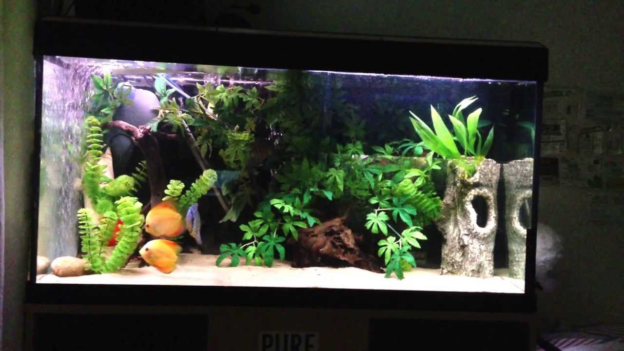 4 discus aquarium set up info youtube for Setting up a fish tank