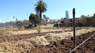 Meet the people growing organic greens for Joburg's inner city