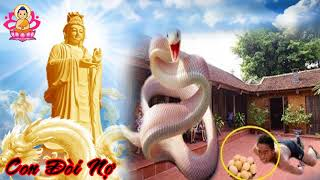 Chuyện Có Thật 100% CON ĐÒI NỢ - Câu Chuyện Nhân Quả Phật Giáo Ý Nghĩa Nhất..Lời Phật Dạy