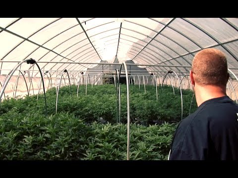 A Sea Of Green (Movie Trailer 2014)