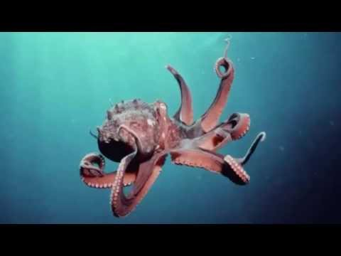 Bé học tiếng anh qua hình ảnh các con vật | em tập nói động vật dưới đáy biển | Dạy trẻ thông minh