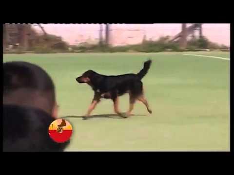 Dog Scores Back-Post Header In Argentina