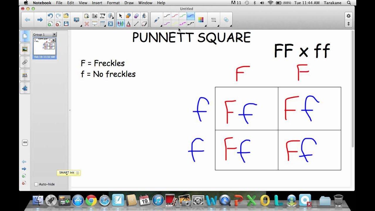 Displaying 18> Images For - Punnett Square Worksheet...