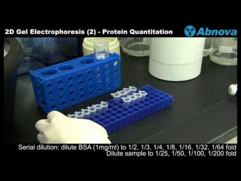 2D Gel Electrophoresis (2) Protein Quantitation