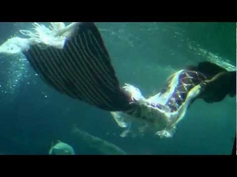 Nàng Tiên Cá xuất hiện tại Nha Trang, Việt Nam - Mermaid appeared in Vietnam.wmv