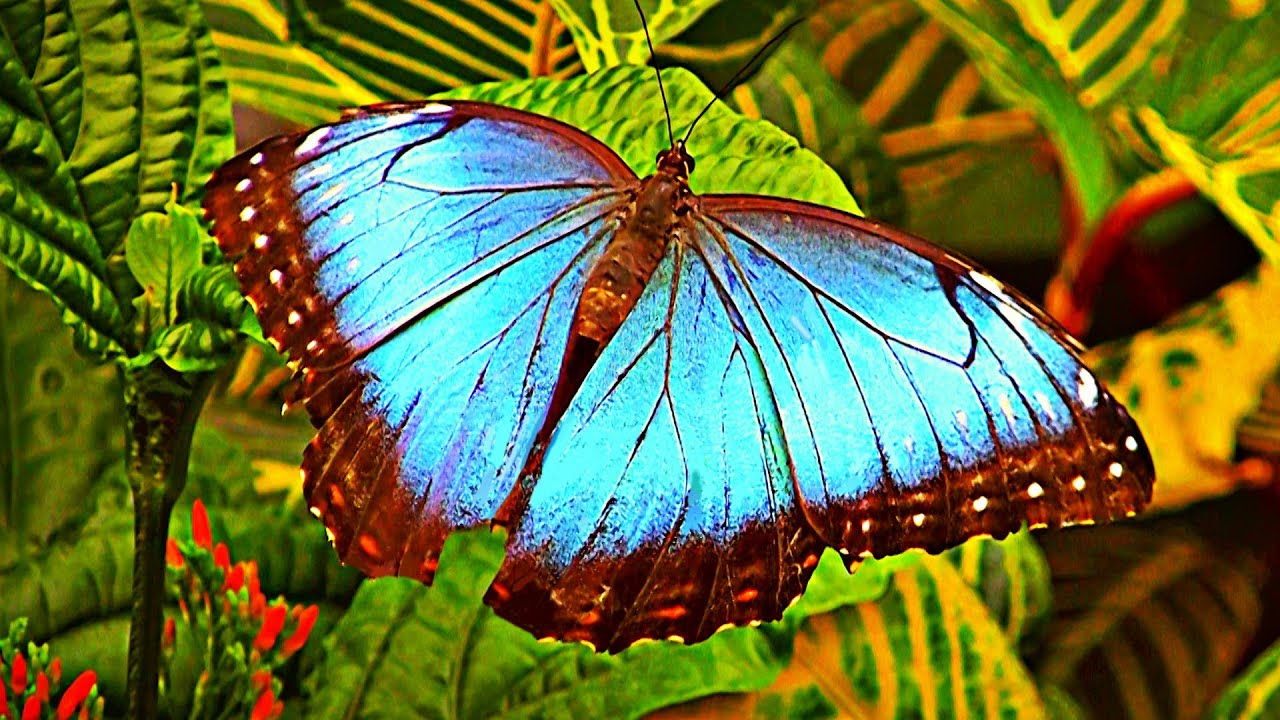 papillons en libert au jardin botanique de montr al youtube