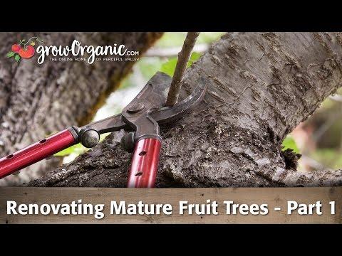 Renovating Mature Fruit Trees - Part 1