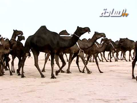 منقية صاحب السمو الأمير فهد بن عبدالله بن محمد بن عبدالرحمن آل سعود (المجاهيم)