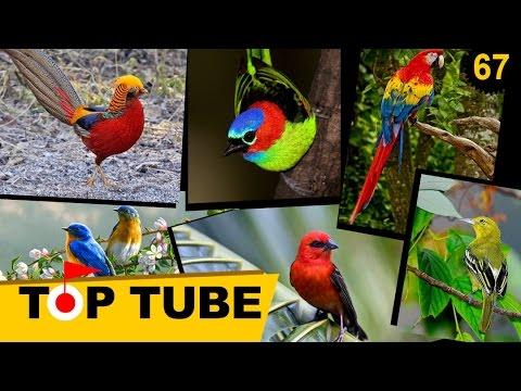 10 Loài Chim Có Thể Khiến Bạn Sửng Sốt Vì Quá Đẹp - Những Loài Chim Đẹp Nhất Thế Giới [Top Tube 67]