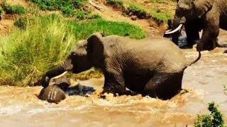 Instant Index: Elephant Calf In Kenya Rescued From A