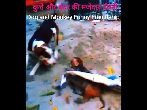DOG BITE FIGHT MONKEY NICE MOVEMENT SO FUNNY