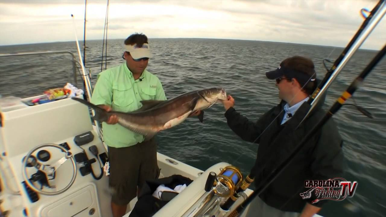 Carolina fishing tv season 2 6 cobia at the cape for Carolina fishing tv