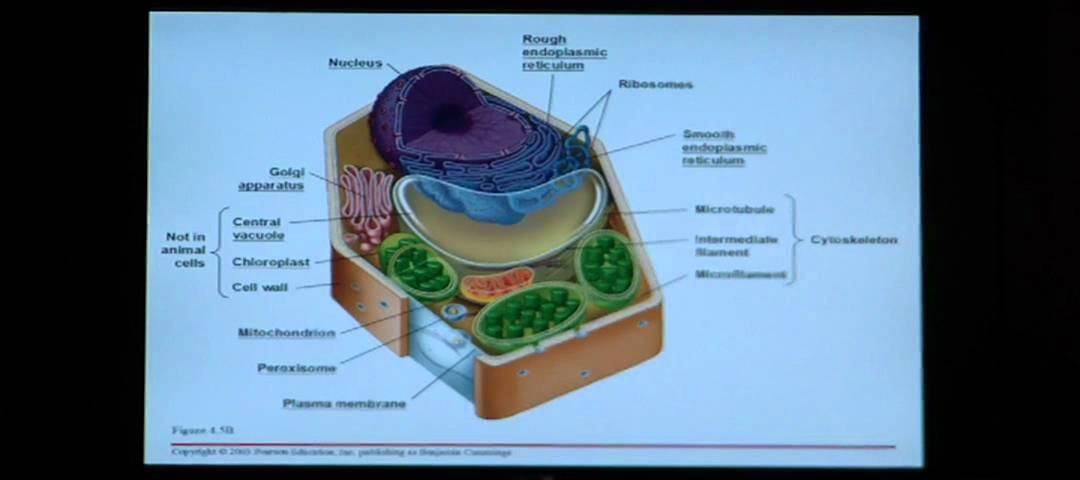 Biology homework help cells