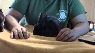 How To Tell If Your Rabbit Is Sick