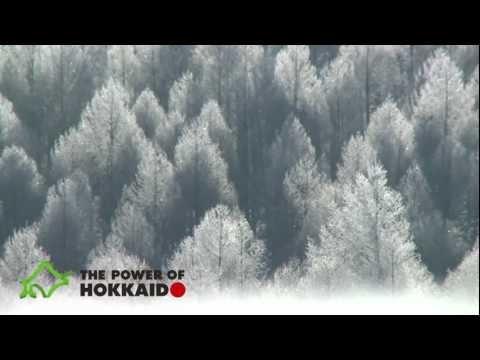【The Power of Hokkaido】winter_white snow