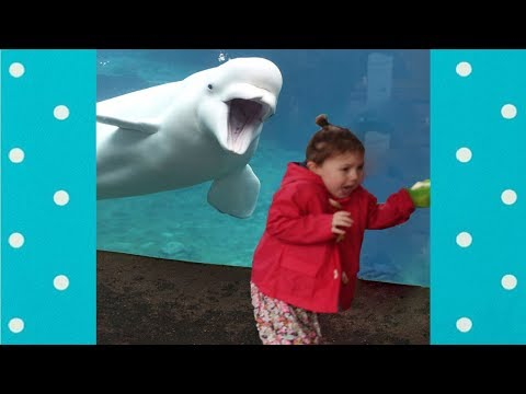 Funny Kids at the Aquarium Compilation #3    Funny Baby and Pet