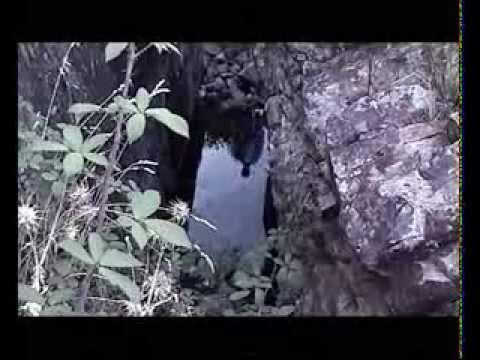 La Hora de los pajaros (Trailer)
