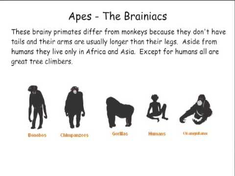 Primate Classification