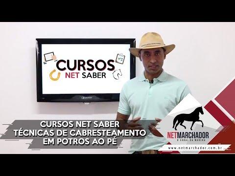 Curso de Doma de potro ao pé: Cabresteamento inicial com André Pinheiro - NET SABER