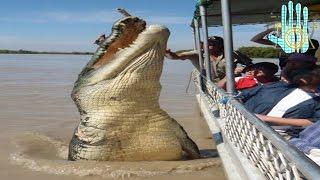 Los 5 cocodrilos más grandes del mundo