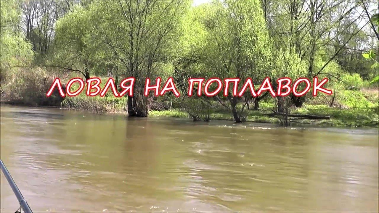 когда можно ловить карася на пруду