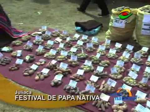 Más de 200 variedades de papa nativa fueron expuestas, en Juliaca
