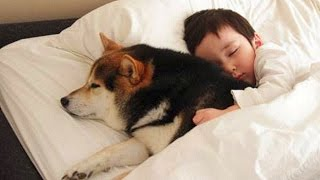 Dog Protecting Baby Compilation NEW