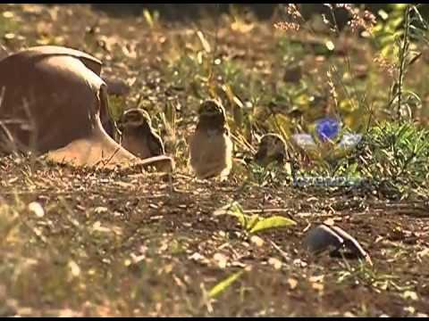 Cenas do Cotidiano - Três corujas são flagradas tomando sol no Santa Mônica