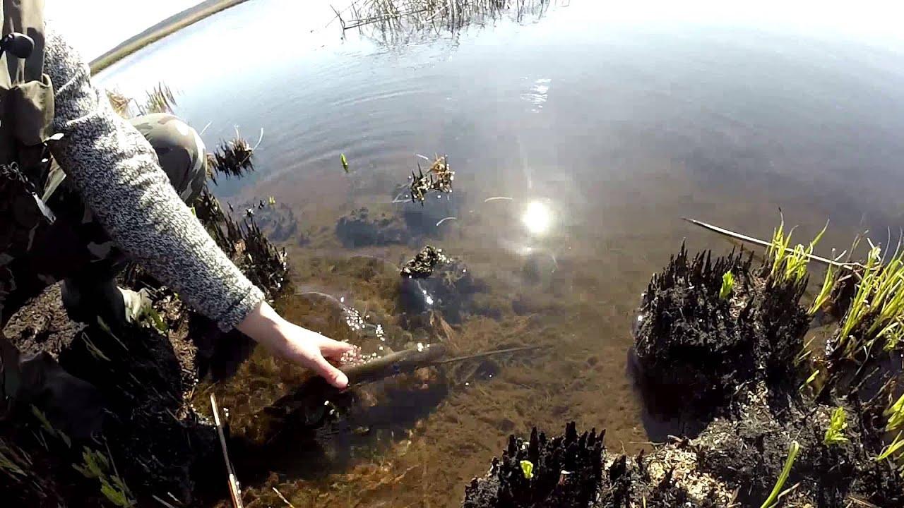 видео как ловят щуку в нерест