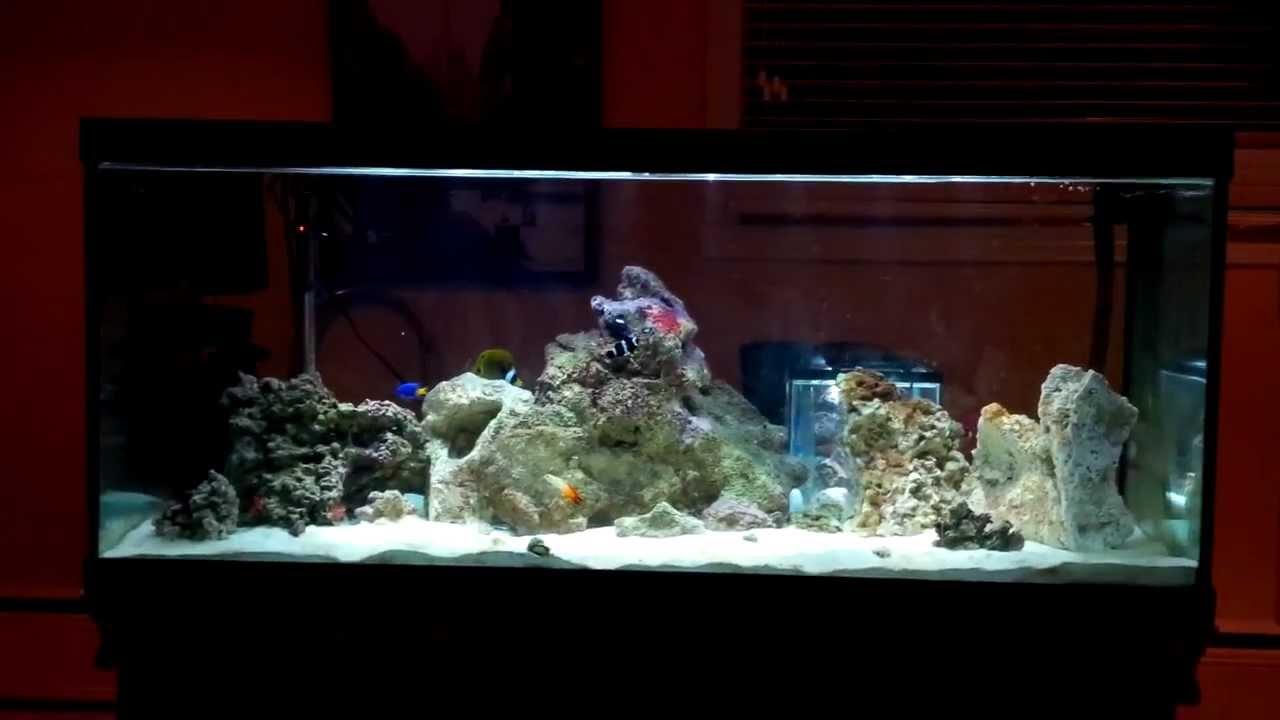 Saltwater fish tank 80 gallon 80 gallon marine fish tank for How many gallons in a fish tank calculator