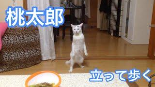 Kucing ini disuruh menjauh dari meja makan, dan lihat apa yang dia lakukan