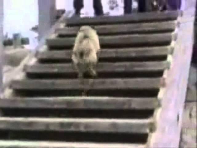 得與失只差一線之動物篇 Best Animals Fail & Wins Compilation Ever!