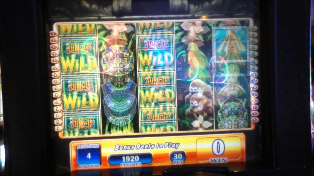 Jungle wild penny video slot machine with bonus for How much does pioneer woman make per episode