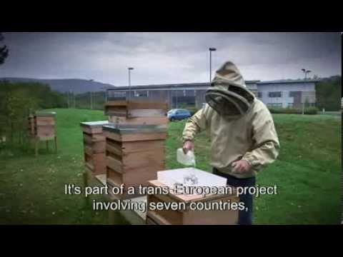 Preserving bees: fighting climate change and biodiversity loss - CAP reform