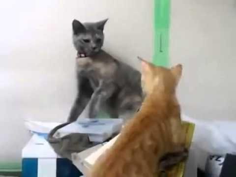 跪地貓vs 1x巴貓