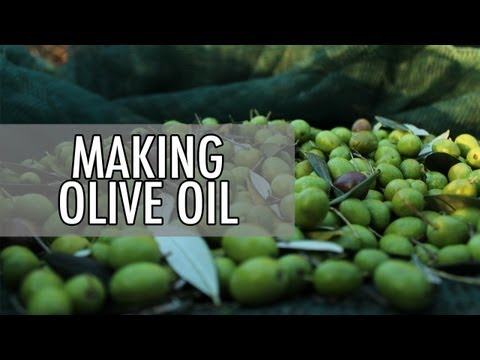 How to Make Olive Oil - Olive Oil Makers in Italy