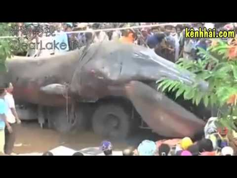 Hàng ngàn người vây xem con cá lớn nhất thế giới.