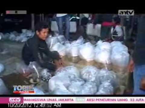 TOPIK ANTV Pasar Ikan Hias